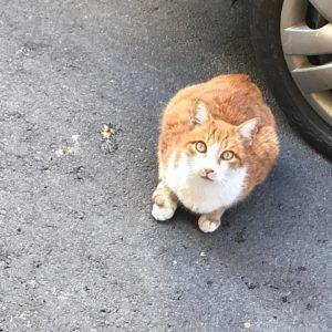 malta-cat