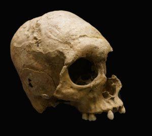 skull-fossil