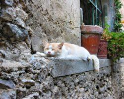 猫と触れ合うマルタ留学