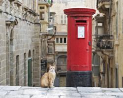 マルタ留学=猫の島留学?